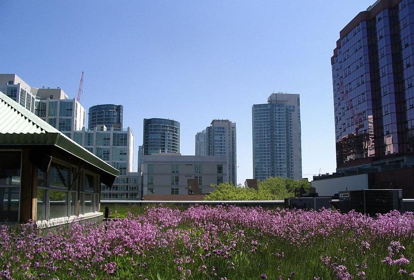Toronto se ha convertido en la ciudad de los techos verdes.